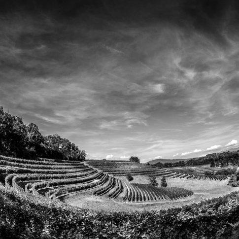 servizi fotografici vino bottiglie vigne bianco e nero