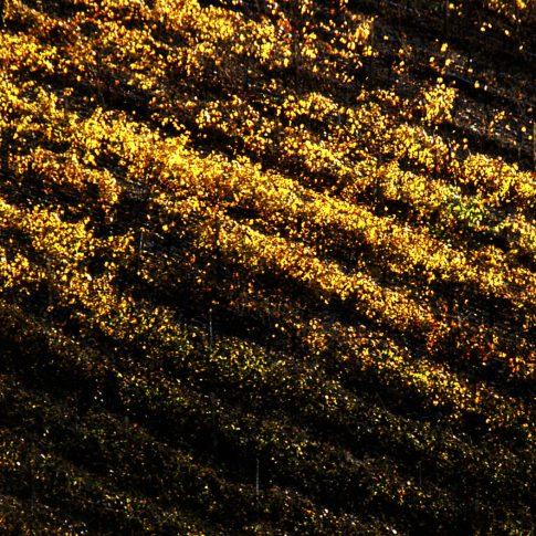 servizi fotografici vino bottiglie vigne autunno