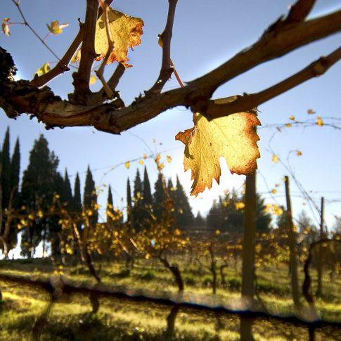 servizi fotografici vino bottiglie vite foglia tramonto