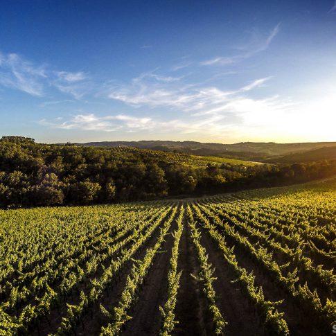 servizi fotografici vino bottiglie paesaggio vigne