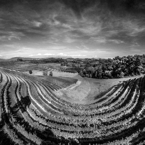 servizi fotografici vino bottiglie vigne paesaggio bianco e nero