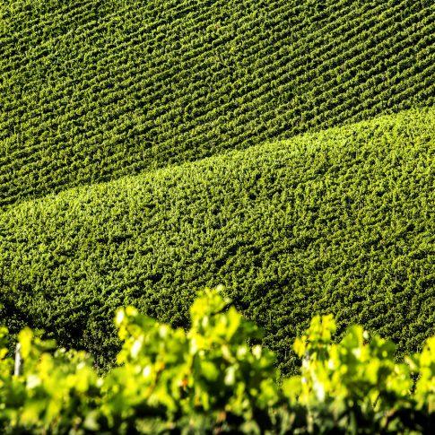 servizi fotografici vino bottiglie vigne paesaggio