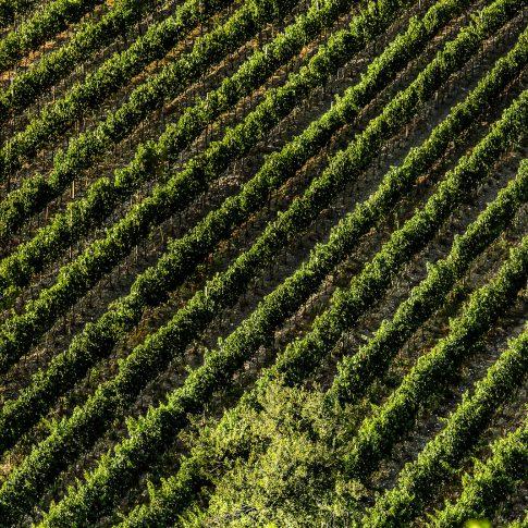 servizi fotografici vino bottiglie vigne