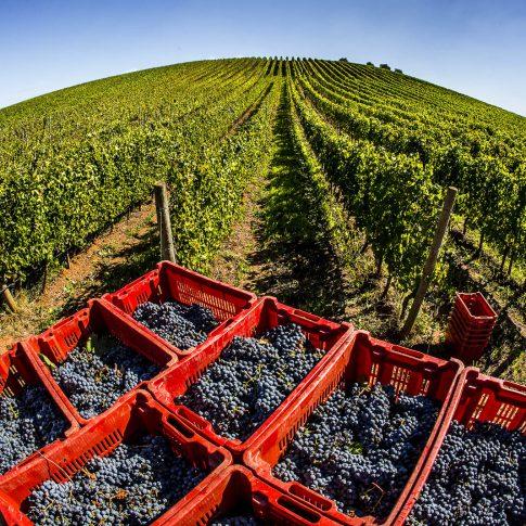 servizi fotografici vino bottiglie vendemmia uva vigne