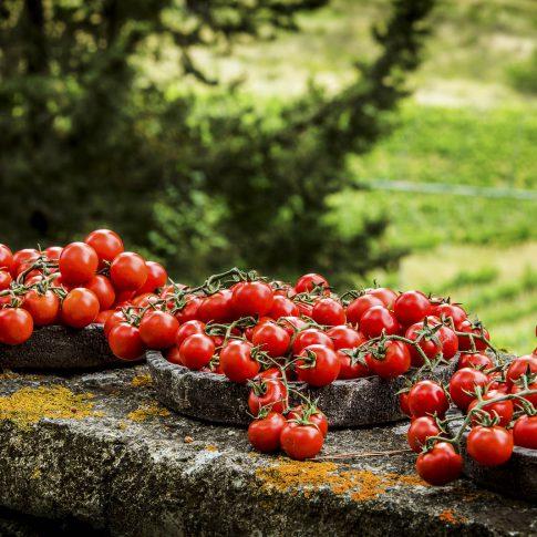 fotografia food ristoranti piatti cibo pomodori rossi