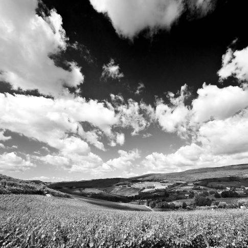 fotografie paesaggio posters chianti bianco e nero