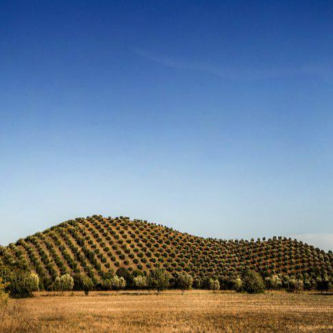 fotografie paesaggio posters capalbio collina ulivi